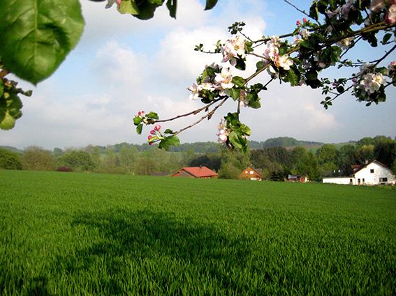 Frühling in Forstmehren